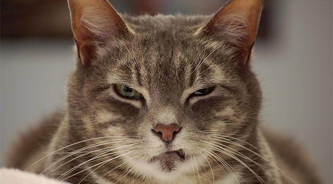 10 preuves que les chats sont le mal incarné
