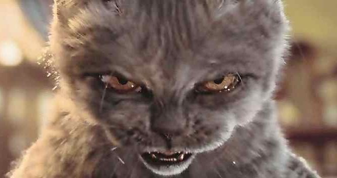 8 chats qui veulent vous tuer et qui réussiront un jour ou l'autre