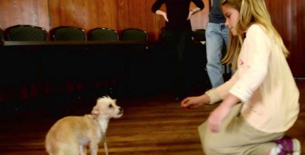 chien-terrorise-abandonne