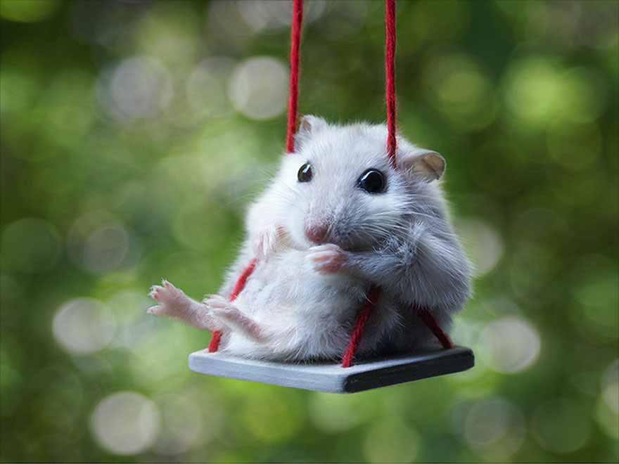 hamster4-compressed