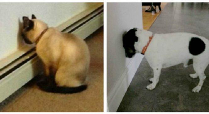 Si vous voyez votre animal faire ça, il faut immédiatement l'emmener chez le vétérinaire!