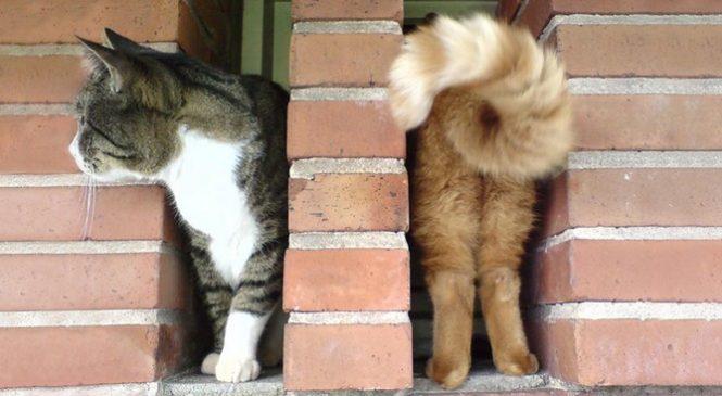 22 photographies de chats qui ont été prises au bon moment