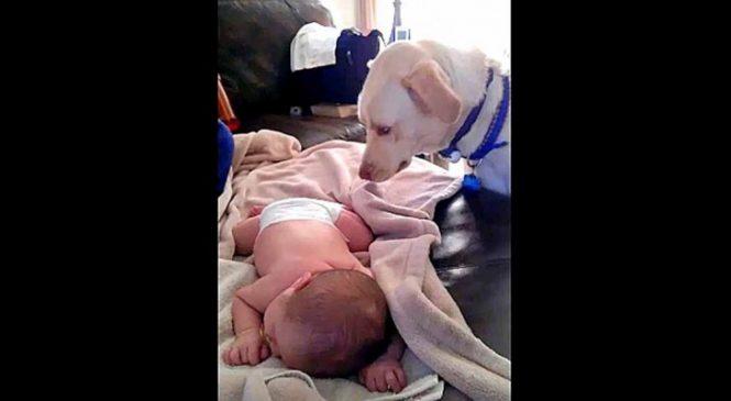 La Maman Ramène à La Maison Son Bébé, Voilà Ce Que Fait Son Chien… WOW!