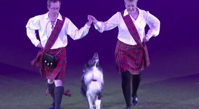 Le Chien Qui Surprend Tout Le Monde Avec Des Écossais