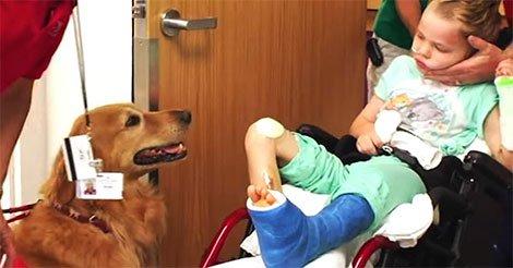 Ils présentent leur fils « sans vie » à un chien. Je suis en pleurs en voyant ce qui s'est passé