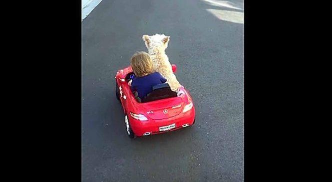 Le Petit Garçon Voudrait Conduire La Voiture, Mais Regardez Son Chien!