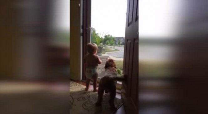 Ce bébé et ce chien voient la voiture de papa arriver, leur réaction est surprenante. Trop chou !