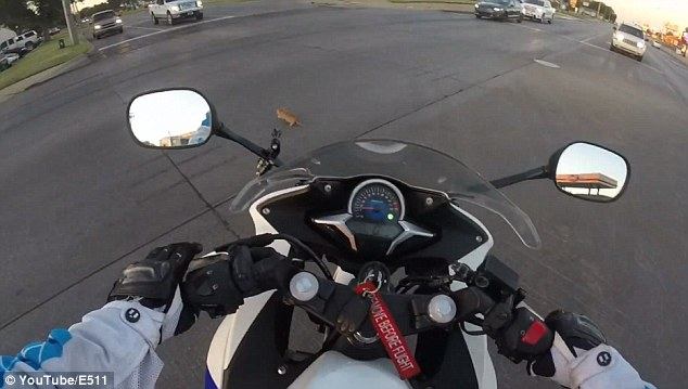 Une motarde voit un chat terrorisé et va faire l'un des plus émouvants sauvetages que j'ai pu voir