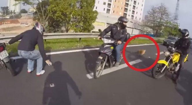 Des Motocyclistes Trouvent Un Petit Chien Sur La Route: Leur Intervention Est Vitale