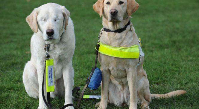 Son chien-guide vient de perdre la vue, ce qui arriva ensuite va vous émouvoir