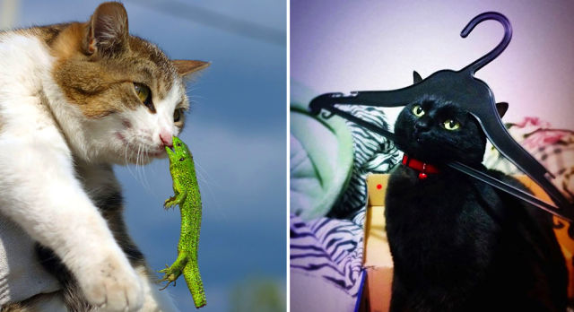 6 chats qui regrettent d'avoir été TROP CURIEUX !