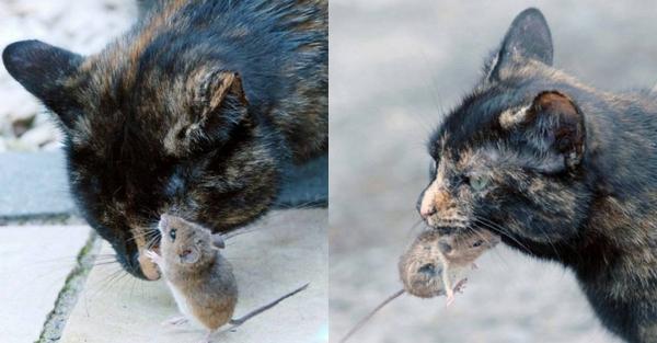 La Surprenante histoire d'Amitié entre un Chat et une Souris