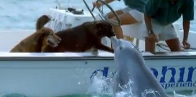 Et soudain, un dauphin embrasse un chien !