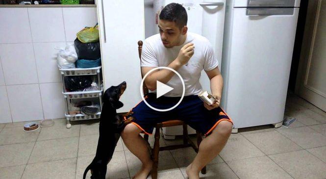 Comment faire prendre des médicaments à votre chien ? En utilisant la psychologie inversée!