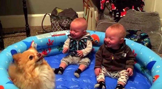 Quand Ce Chien Nain Commence à Sautiller, La Réaction Des Jumeaux Surprend Même La Maman!