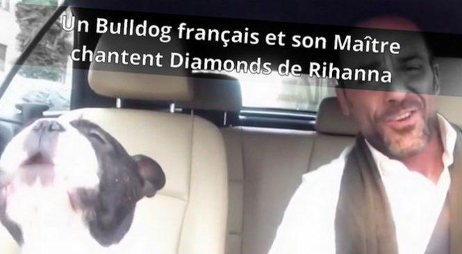 Un bulldog français vous présente son duo de chant avec son maître
