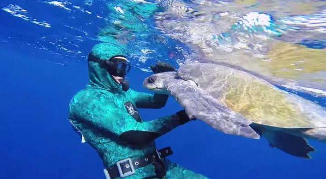 Un homme sauve une tortue coincée dans un filet