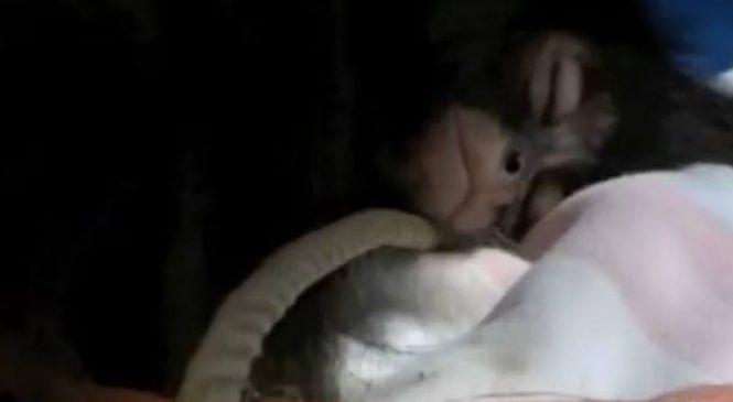 Un singe blessé a été retrouvé. La radiographie révèle L'horreur qu'il a vécu !