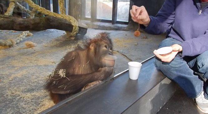 La réaction trop drôle d'un singe qui voit un tour de magie