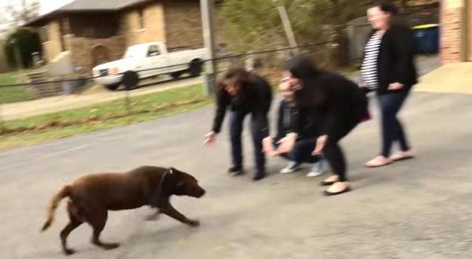 Il Y A 5 Ans Un Labrador A été Volé. Voici Les Retrouvailles Avec Sa VRAIE Famille !
