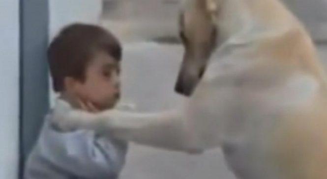 Un labrador doré rencontre un garçon trisomique pour la première fois. Sa réaction m'a laissé sans voix.