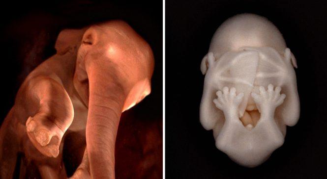 10 Photos d'animaux dans le ventre de leur maman