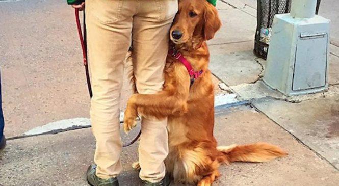 Ce chien a fait rire tous les passants à un passage piéton
