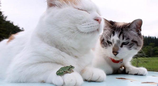 Le chat le plus ZEN de la terre. Même la bête à ses côtés ne peut le perturber !