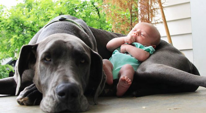 Et dire que certains maltraitent le meilleur ami des enfants. 10 photos qui rendent heureux !