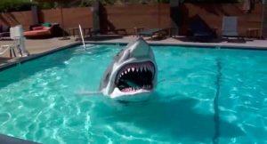 deguisement-requin