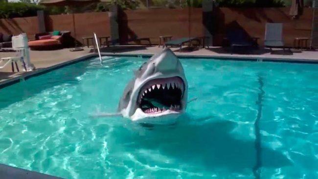 Ce Déguisement De Requin Plus Vrai Que Nature Va Vous Effrayer !