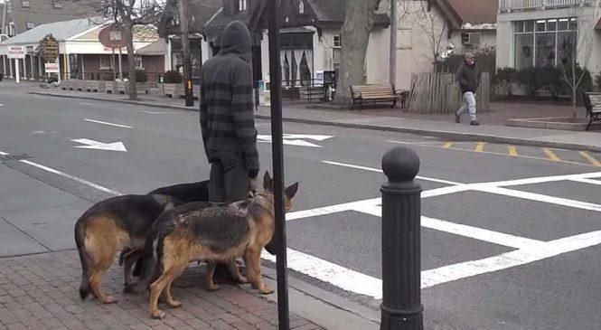 J'ai cru qu'il promenait juste ses chiens, puis un détail unique m'a frappé !