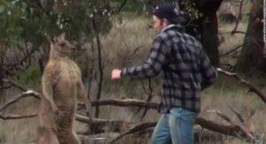 kangourou-compressed