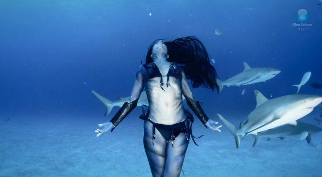 Un incroyable ballet aquatique avec des requins
