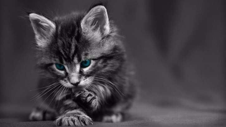 chaton-mignon-compressed