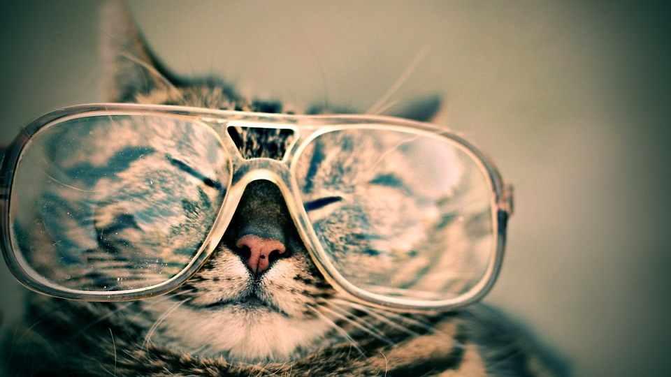 lunette-compressed