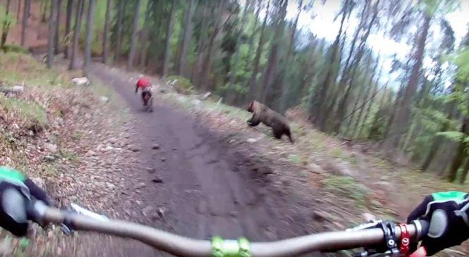 Quand vous vous baladez à VTT en forêt et qu'un ours décide de vous faire la peau