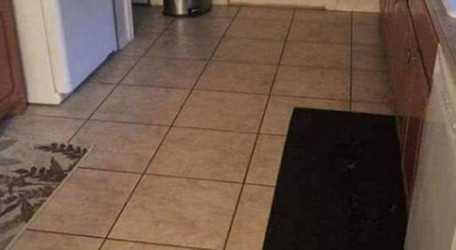 Jeu Facebook : Êtes-vous capable de trouver le chien caché dans l'image ?