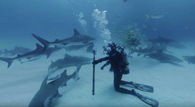 Immersion : Plongez dans une mer de requins avec cette vidéo en 360°
