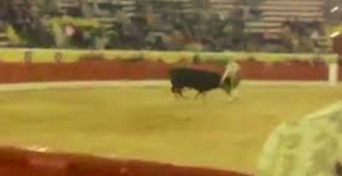 Un énorme taureau tue un toréador devant les yeux horrifiés du public