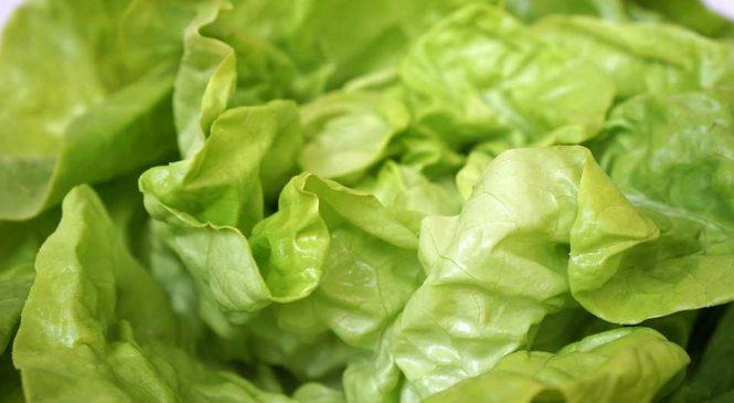 Comment conserver la salade verte ? Astuce pour qu'elle reste fraîche