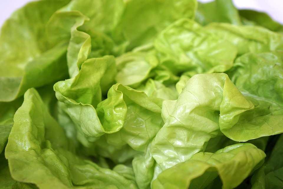 comment conserver la salade verte astuce pour qu 39 elle. Black Bedroom Furniture Sets. Home Design Ideas